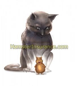 Hamster_Cat