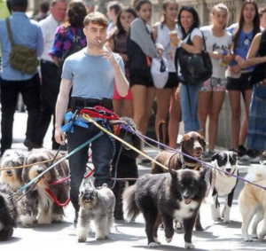 Daniel_Radcliff_Walking_Dogs
