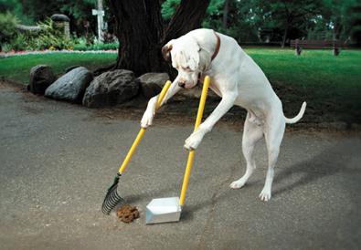 poop shovel