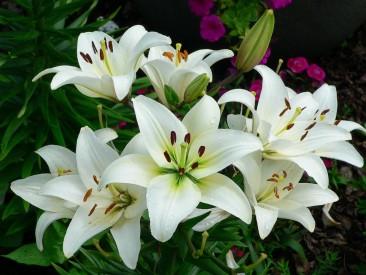 Flippa – A Look Forward: Lilies.com and MMLM.com Hit Reserve, Bart.com, 1847.com, More